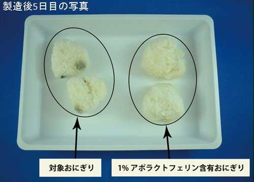 抗菌作用おにぎりの実験