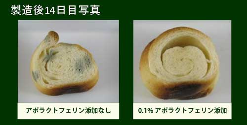 抗菌作用パンの実験